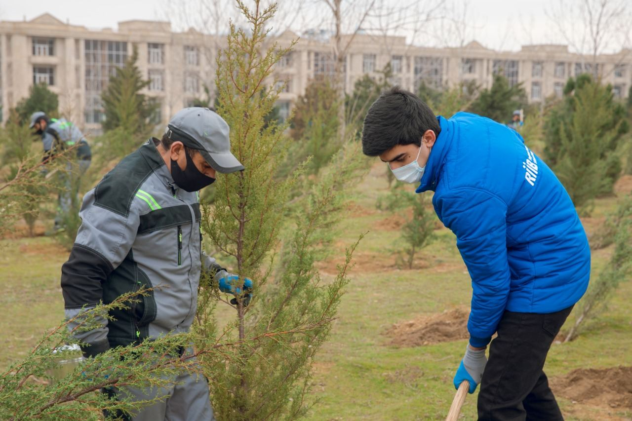 """BŞİH və """"Regional İnkişaf"""" İctimai Birliyinin birgə təşkilatçılığı ilə ağacəkmə aksiyası keçirilib - FOTO"""